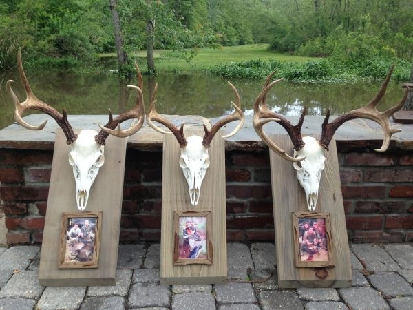 How To Bleach a Deer Skull The Steps